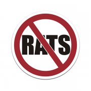 No Rats Union Labor Hard Hat Helmet Truck Sticker Decal V2